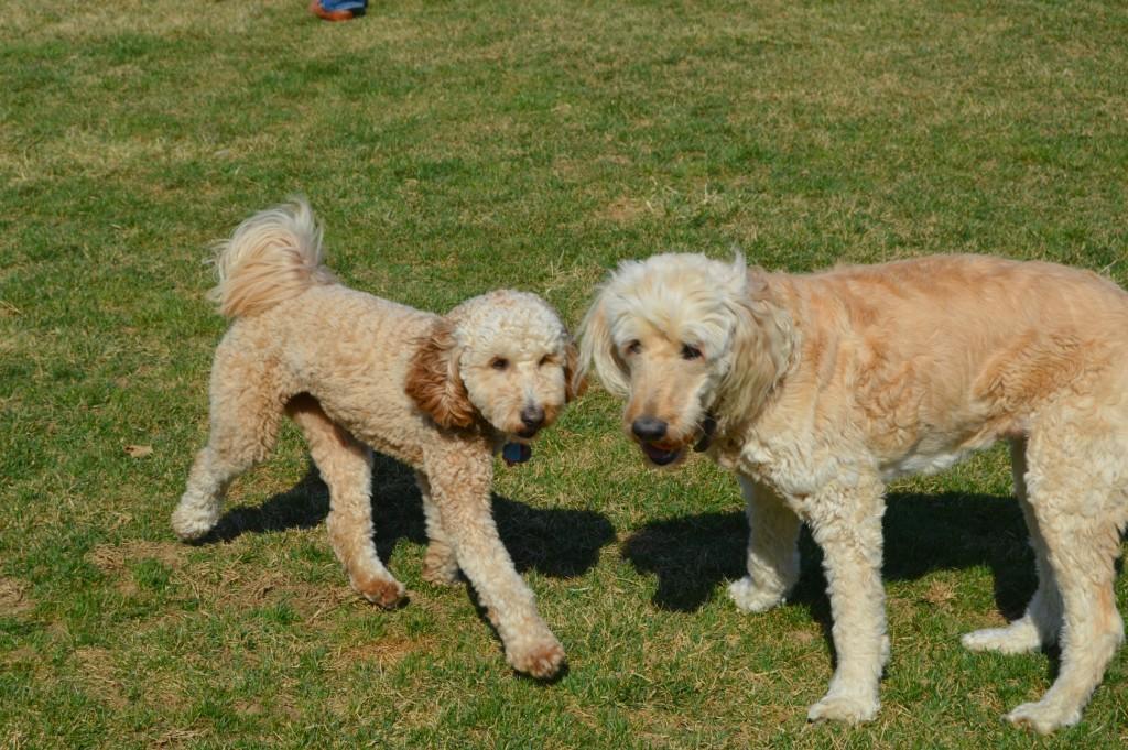 Ruby and Sadie