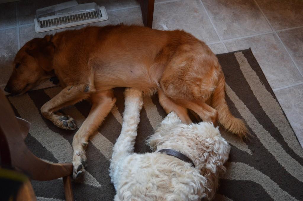 Lola_and_Sadie